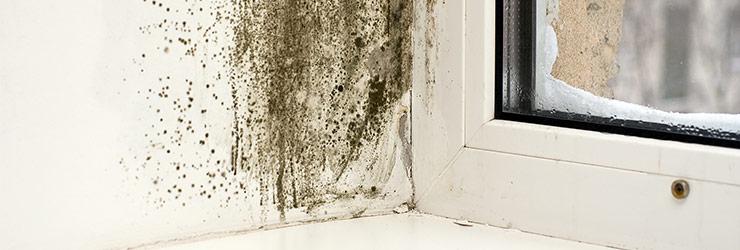 schimmel op muren